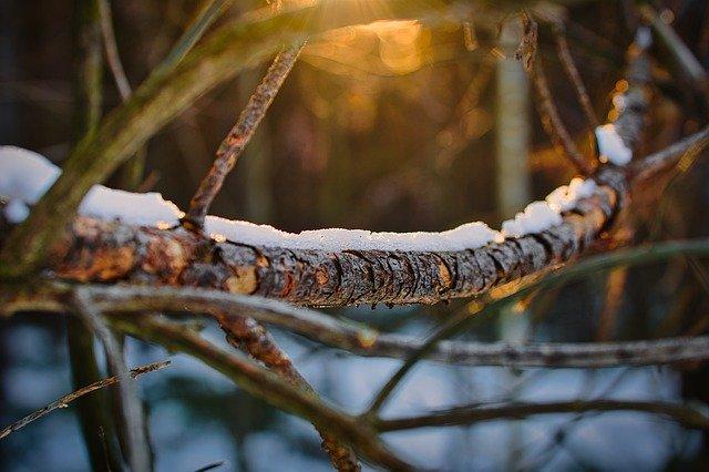 branches d'un arbre